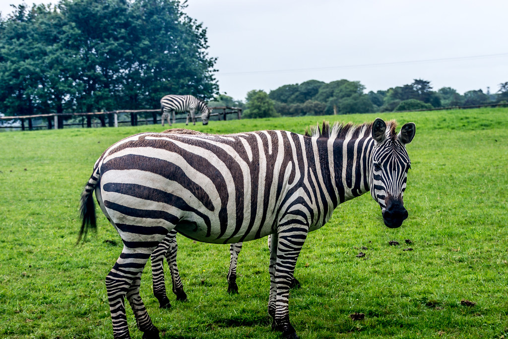 Fota Wildlife Park in Cork, Ireland